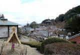 奈良 相撲発祥の地へ