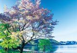 十和田八幡平国立公園2[秋田県]