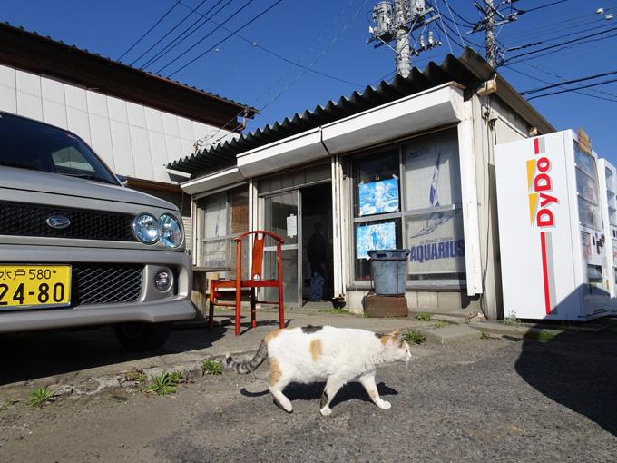 ゆるカブ第百二十九回「昭和のレトロ自販機を探訪!」 03画像