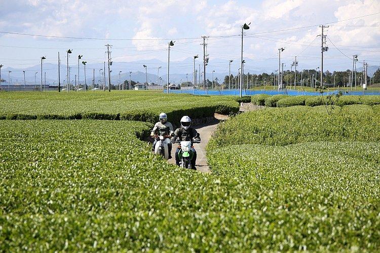 お茶畑の間のこんな道も、原付なら気軽に入って行けます。もちろん、農家の人の邪魔にならないよう気を付けて走ります