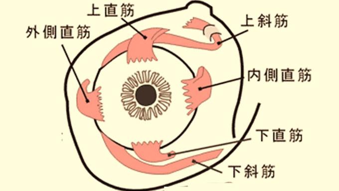 視力 は 動体 と