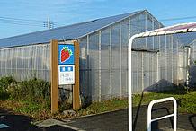 いちごの温室です。収穫期には、このハウスでいちご狩り(時間制限有りの食べ放題)を行うことができます。