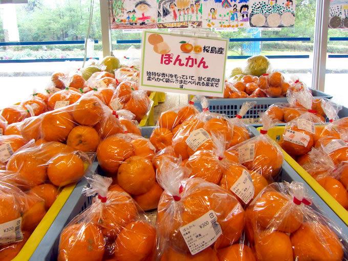 柑橘類は桜島小みかん、不知火(デコポン)、ポンカンを多く見かけました。