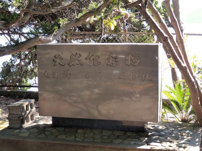 思い出と発見が詰まった伊豆半島を巡る旅の画像