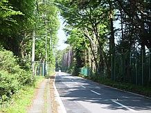 ゴルフ場を貫いて走る道。時々、ゴルファーが横断しますので注意が必要です。千葉県北西部にはこんなゴルフ場もたくさんあるようです。芝の香り、木の香りがする素敵な道ですね。