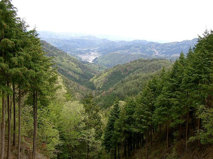 見晴らしの良い林道其ヶ谷線は、道幅も広くフラット。入口は南側の県道602号上、兵庫県と大阪府の県境からが分かりやすい。