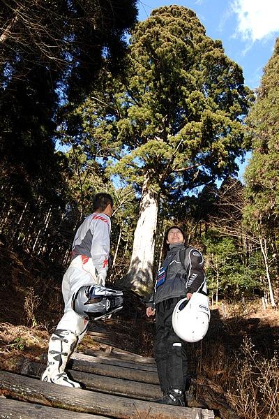 渓流が一枚の岩の上を滑るように流れる滑沢渓谷。そこから原生林が美しい滑沢林道を走って太郎杉を見に行った。400年以上の時間を越えてきた太い根元からのアングルに圧倒。