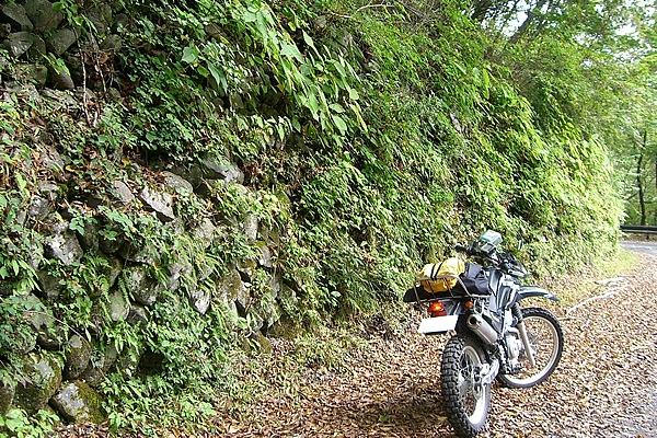 小菅川沿いの、道幅の広いフラットな路面。石を積み上げた石垣の間からは草やシダ類が茂り、周りの木々も潤いがあり明るい。道の途中から、美しい雄滝と白糸の滝に行ける。落ちついた古道といった感じの林道小菅線