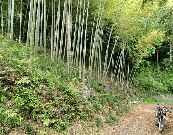 入口のゲート先にある「閉める事」の看板にしたがい、「林道風巻入線」に入る。竹林を過ぎると、「林道石原沖線」の分岐がある。ここから先は、土のピストが薄く見えるほど下草が茂っているが、路面は悪くない
