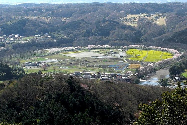 標高305mの日和田山から眺めるとよくわかるが、地形が巾着に似ていることから巾着田という。高麗川が大きく湾曲した流れを利用して米を作っている。春の桜と菜の花、そして日本一といわれる秋の曼珠沙華は本当に見事