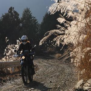 初めて剣抜大洞林道を走ったのは22年前。飛び飛びの舗装は延長したが、急坂へのヘアピンカーブ、アップダウンのダートは健在。峠を過ぎて、そろそろ東に一際眩しい富士山が見えてくるころ。それにしても、すすきがヒラヒラといい感じ。