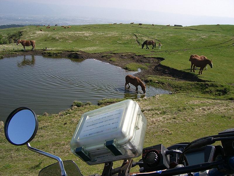 このうえもなく楽しい風景。阿蘇町まで見渡せる草原地帯に茶色のジャージー牛が放牧されている。絞りたての牛乳はコクがあり、またここのソフトクリームはとろけそうに美味しいんです!