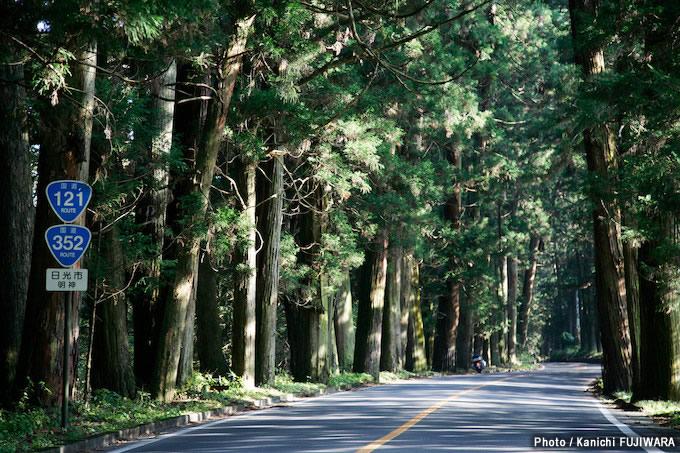 日本の絶景100選 日光杉並木(栃木県)の画像