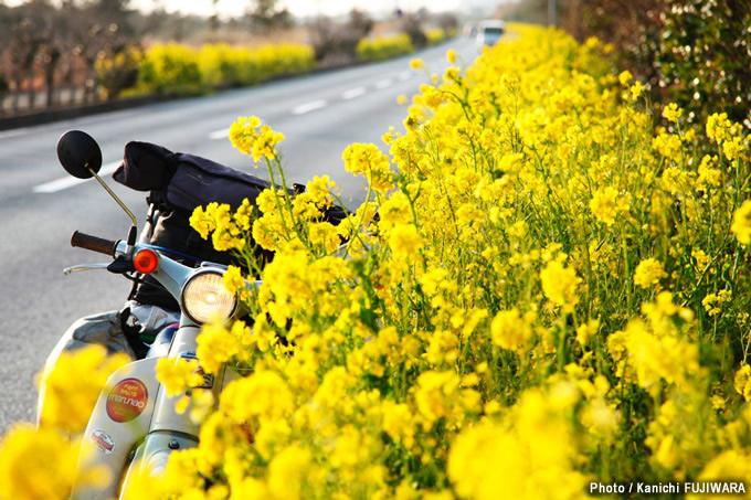 日本の絶景100選 房総フラワーライン(千葉県)の画像