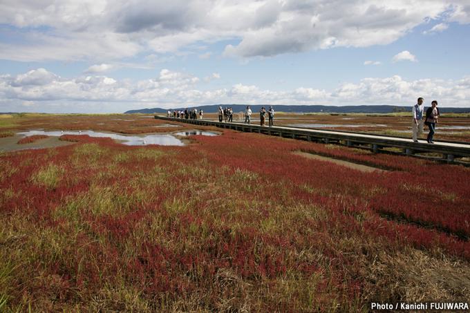 日本の絶景100選 能取湖のサンゴ草(北海道)の画像
