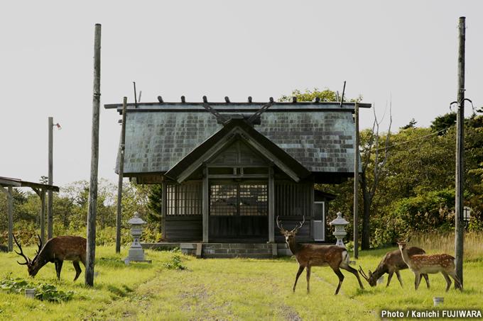 日本の絶景100選 落石神社の野生鹿(北海道)の画像